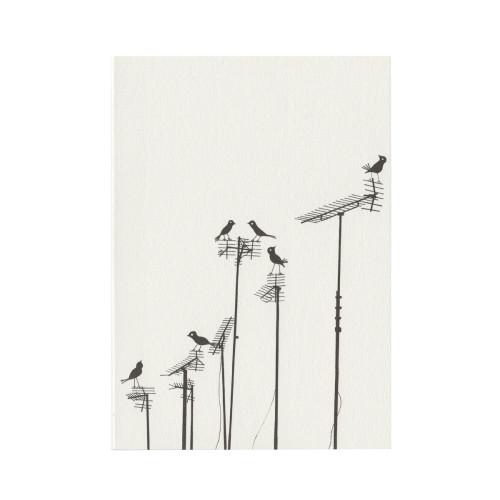 Aerial Birds Image