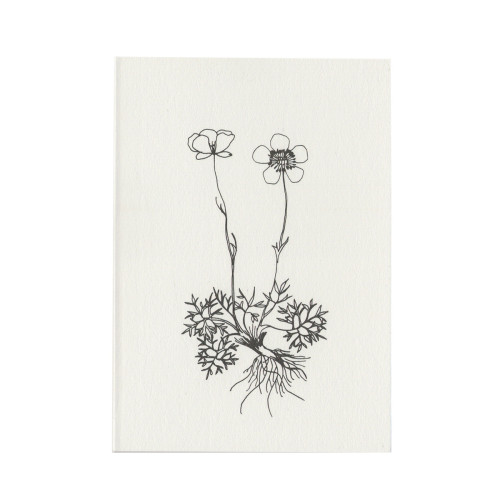 Ranunculus flower Image