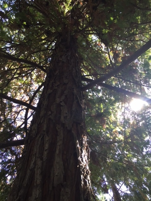 light through the trees mary e clark life coach
