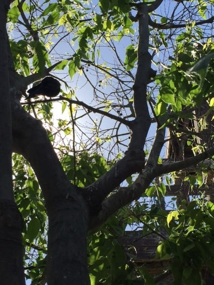 Bird in tree Mary E. Clark, Life Coach