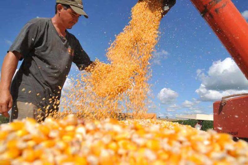 O que é BM&F - O produtor de milho, com contratos futuros, consegue se proteger de possíveis prejuízos.
