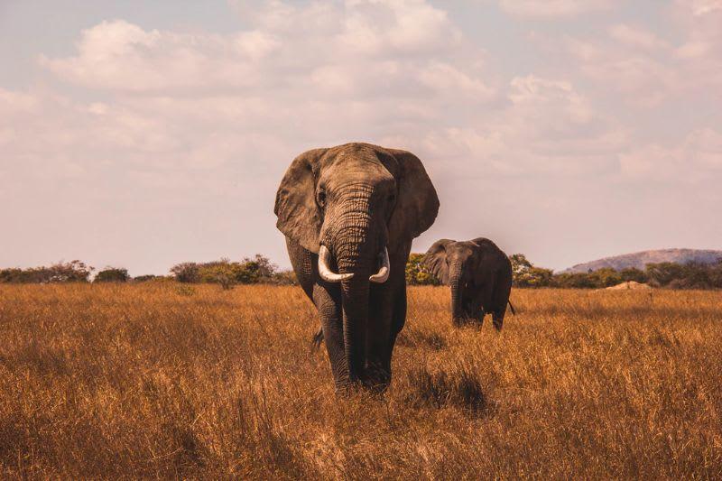 Elefantes não passariam despercebidos ao entrarem numa piscina, assim como grandes players não passam despercebidos ao abrirem ou fecharem suas posições