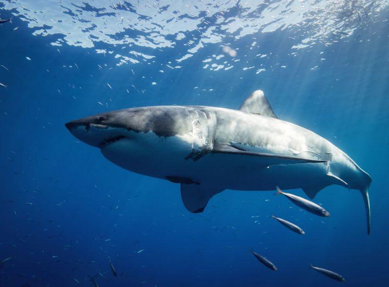 Através do Tape Reading, as sardinhas pegam carona com os tubarões