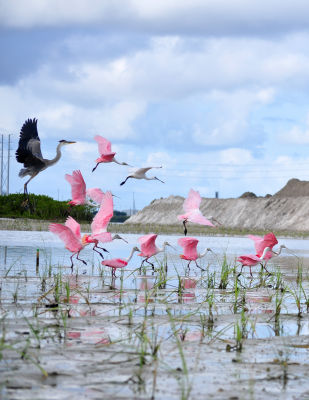 Migratory birds routinely visit the Tampa Bay area to nest.