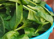 Las verduras verdes que te ayudan a ser bella