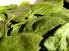 Ingredientes Saludables: Espinacas