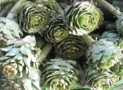 Ingredientes saludables: Alcachofas