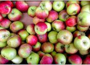 5 Postres para preparar con Manzanas