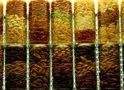 Los distintos tipos de arroz y sus usos