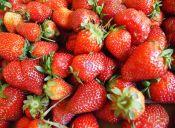 ¡Amor por las frutillas!
