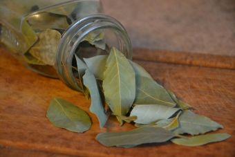 Laurel: propiedades, beneficios y usos en la cocina
