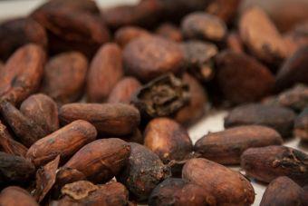 Alimentos saludables: Cacao