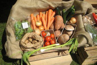 ¿Dónde comprar productos orgánicos en Viña del Mar?