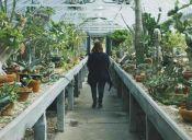 5 consejos para crear un huerto en tu jardín