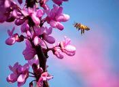 ¿Qué podemos esperar de la primavera?