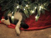 Cute gatitos navideños