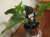 ¿Se te olvida regar?: plantas que twittean y avisan cuando necesitan agua