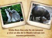 Día de la Madre: 10 y 11 de mayo mujeres tendrán entrada liberada al Buin Zoo