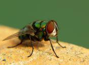 Cosas de loca: me alteran las moscas