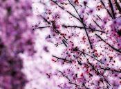 5 rápidas razones para esperar la primavera