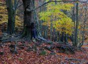 Pequeñas cosas increíbles: el poder sanador de la naturaleza