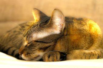 Pequeñas cosas increíbles: dormir con tu gato