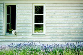 5 colores que no deben faltar en tu hogar
