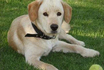 Pequeñas cosas increíbles: que tu perro te mueva la cola