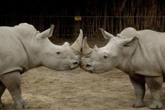 Un día de los enamorados distinto en Buin Zoo