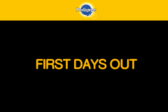 "Campaña digital destacada: ""First days out"" de Pedigree (BR)"