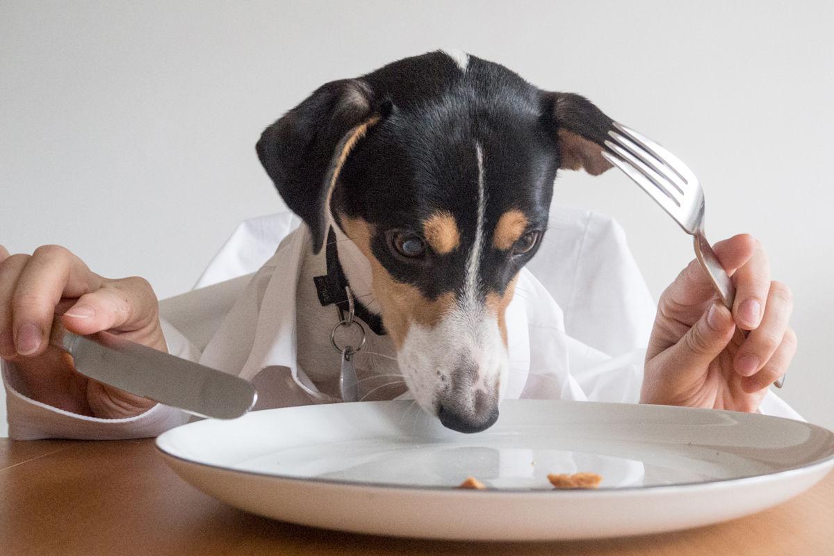Por Qué Mi Perro Come Caca Mascotadictos
