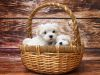 10 cosas que debes tomar en cuenta si adoptas o quieres adoptar un perro