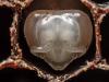 [Video] Muestra como es el proceso del nacimiento de una abeja
