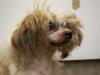 Emerson, un perro que se aburrió de los malos tratos