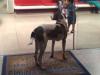 Un perro esperó dos semanas en las puertas de un hospital