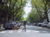 Un perro protagoniza campaña de donación de órganos en Argentina