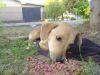 Historias de Rescate: Cojito, un perro maltratado por el guardia de un supermercado