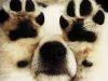 Perros que creen que están muy bien escondidos (Parte II)