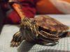 Historias de Mascotas: ¡Se me perdió mi tortuga!