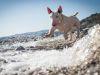 Perfiles: Conoce un poco más de los Bull Terrier