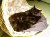 Síntomas y precauciones con las gatas al parir