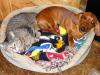 Calendario de vacunas para perros y gatos