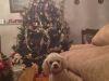 Regala amor, adopta perros y gatos en Navidad