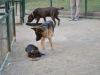 Ir con tu mascota al parque para encontrarle pareja