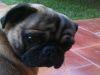 ¿Qué puedo hacer para que mi perro no se canse tanto con el calor?