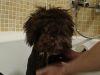 Ocho recomendaciones para bañar sin problemas a tu mascota