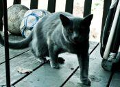 Video: Gato ataja todo lo que le tiren