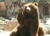 Mujer es enterrada viva por el oso que la atacó