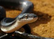 ¿Quieres una serpiente en tu casa?