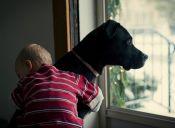 Estudio demostró que los perros perciben el dolor de los humanos